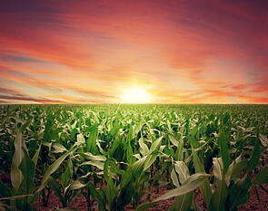 farm bill 2012, agriculture bill, USDA