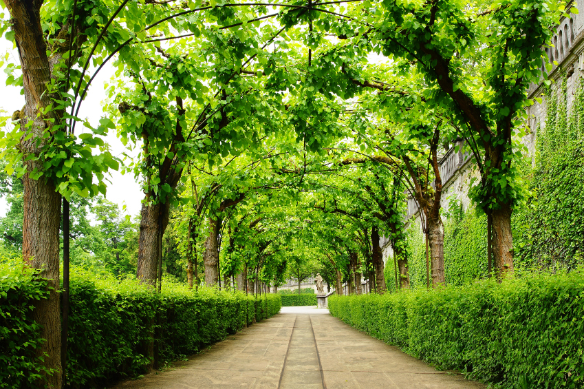 Arching Trees in an Article About Parks for Underserved Communities