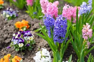 Colorful Flowers in an Article About the Choice Neighborhoods Implementation Grant