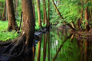 Wetlands in an Article About Wetlands Censervation Grants and Funding