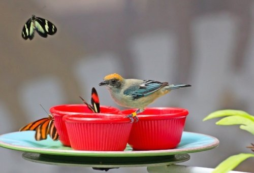 Butterfiles-and-birds-in-a-post-about-grants-for-birds-and-conservation