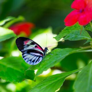Butterfly in an Article About Gro1000 Garden and Green Spaces Grant