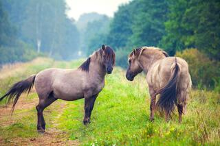 Two Horses in a Grants for Rural Areas Article