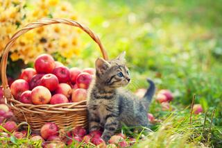 Kitten and Apples in an Article About Fiscal Sponshorship for Local Government
