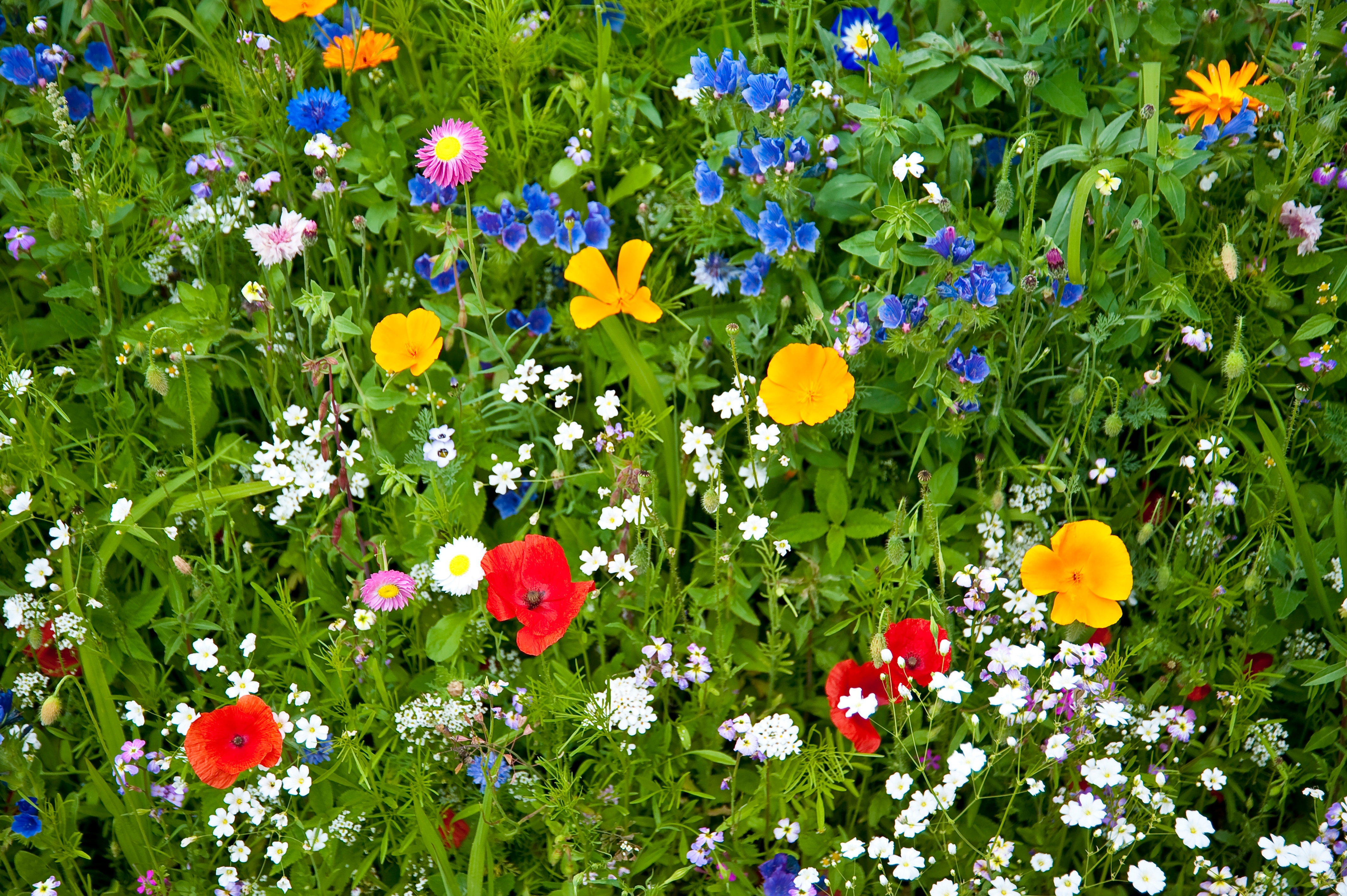 Wildflowers in an Article About Grant Professional Appreciation Day.