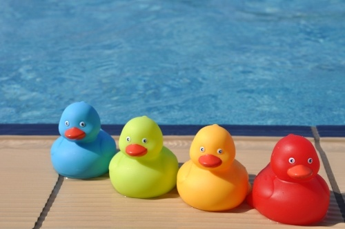 1 1 million grant for swimming pool safety for Keep ducks out of swimming pool